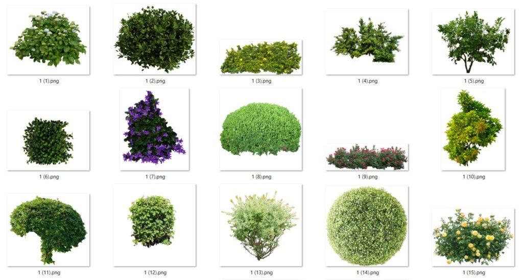arbustos png y árboles