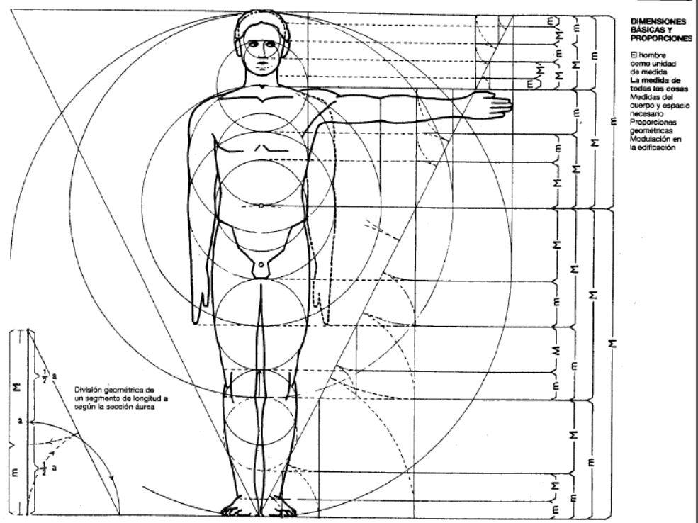 modulor, medidas y proporciones del cuerpo humano
